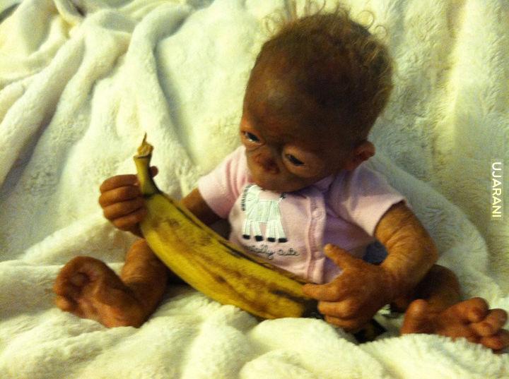 Mały Orangutanek