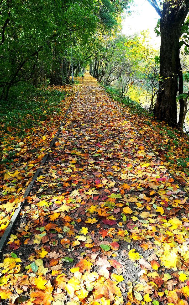 Kolorowo w parkach i ogrodach ^^