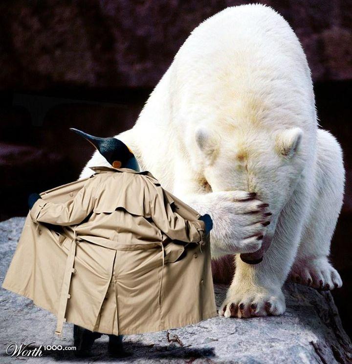 Pingwin zbok...