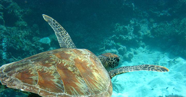* Google Street na dnie Wielkiej Rafy Koralowej ! Enjoy :)