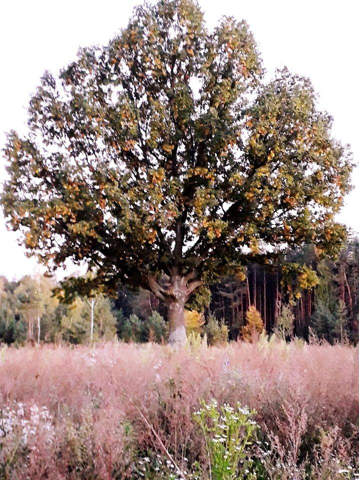 Drzewo.