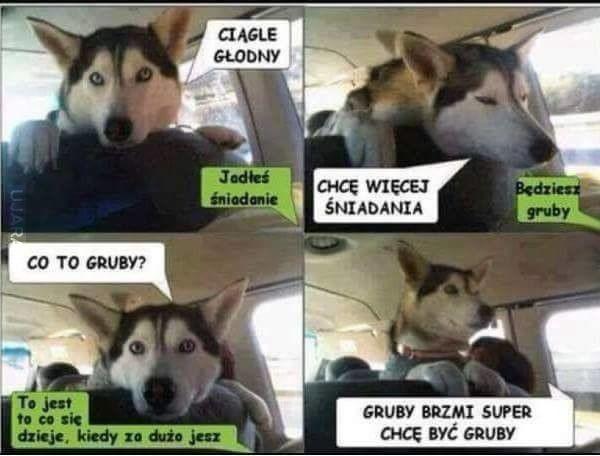 Psy to największe sępy  !