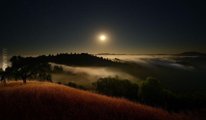 Pośród mgły