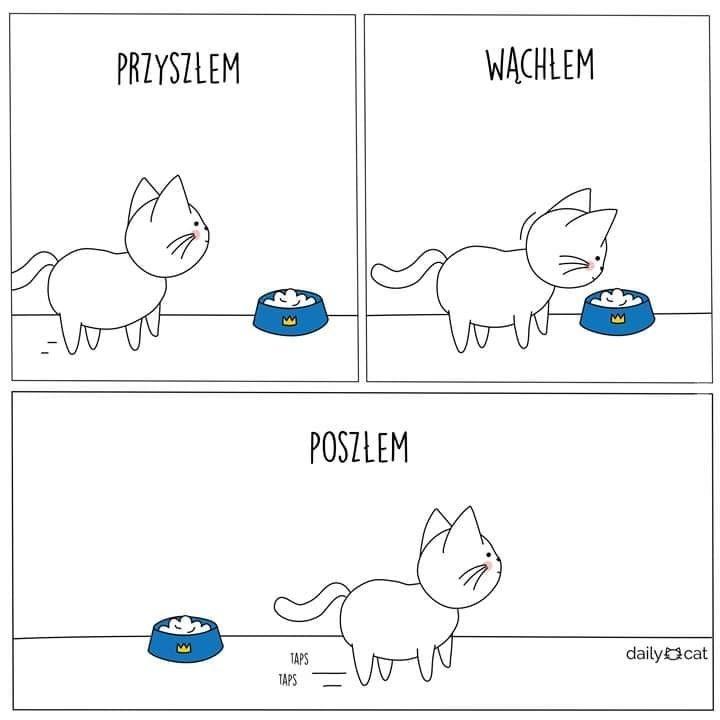 Każdy kto ma kota zrozumie to :D