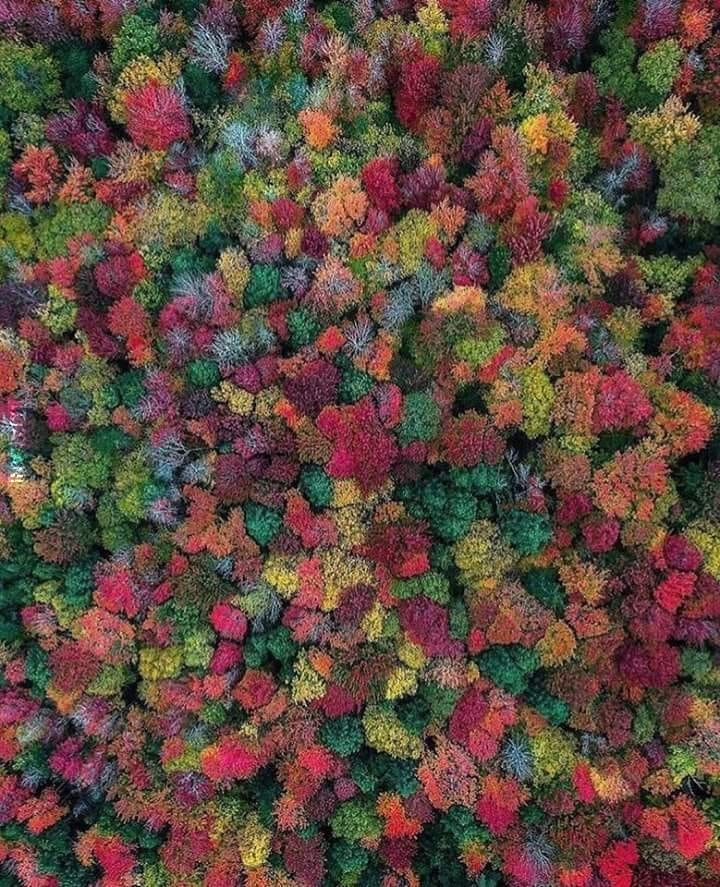 Psychedelic colorful nature
