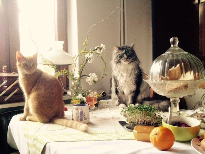 Koty sie stołują!