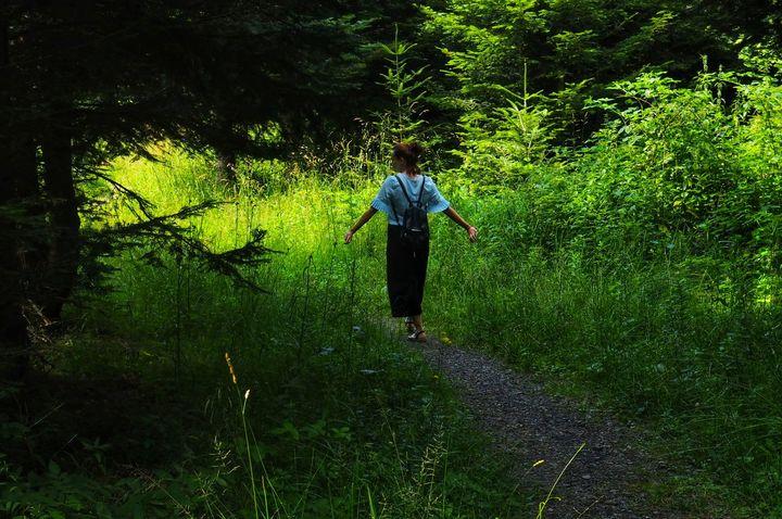 W drodze do nagrubszej jodły - Lasumiły