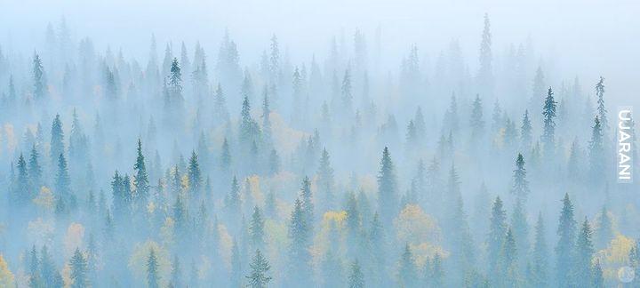 Mgła....