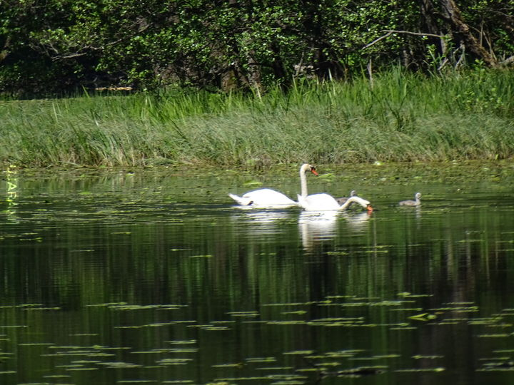 Wędrówka po Suwalskim Parku Krajobrazowym