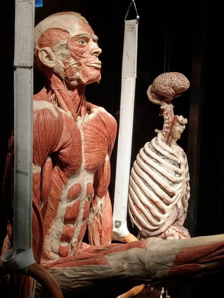 Body worlds Gdańsk
