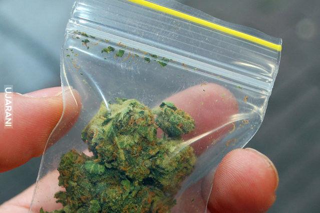 Brytyjscy naukowcy potwierdzili, że marihuana zapobiega nowotworom.