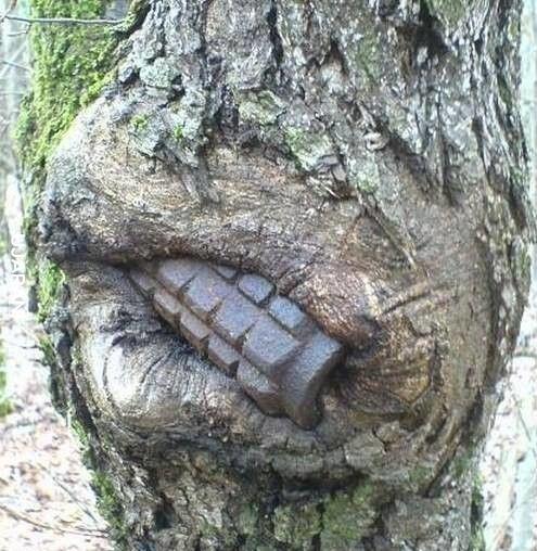 Historia wrośnięta w drzewa