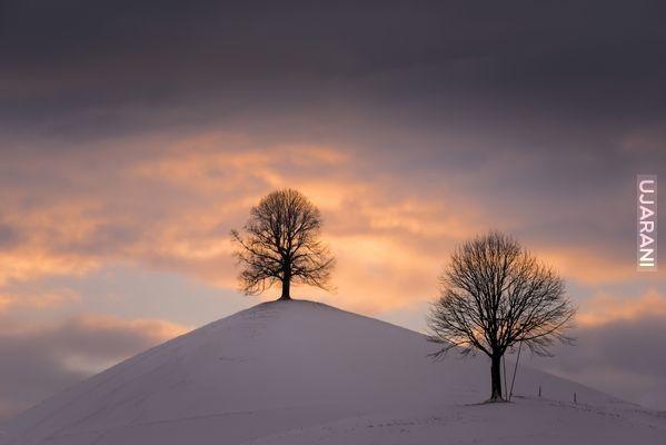 Drzewa..