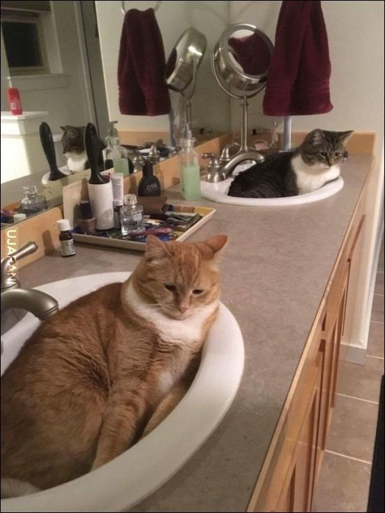 Salon kotności