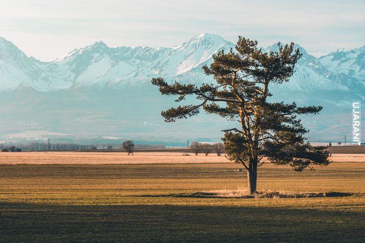 Samotne drzewko na tle Tatr ;)