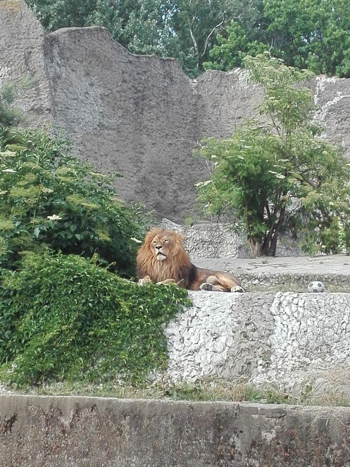 Warszawa King zoo