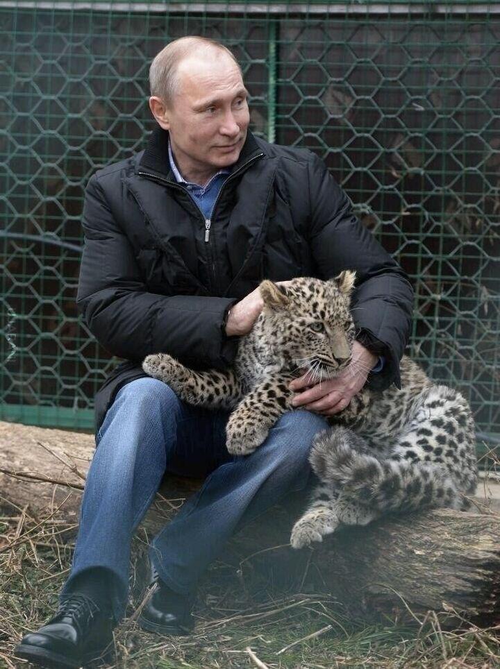 Putin bawi się z perskim lampartem