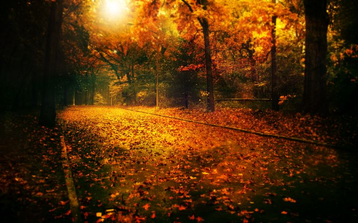 Tapeta - Jesień