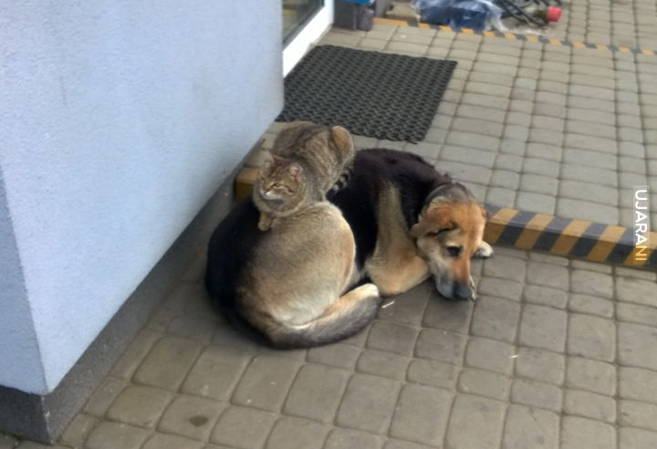 Zepsuty pies