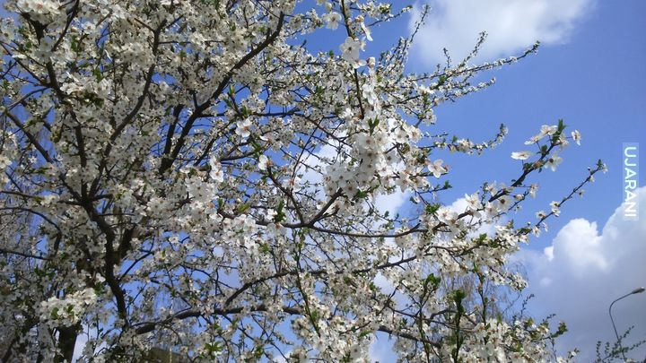 Wiosna !