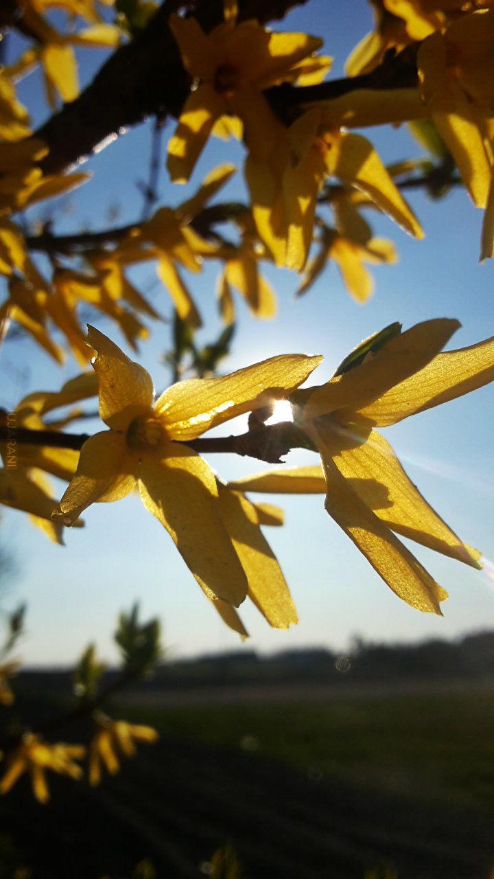 Wiosenne tripy