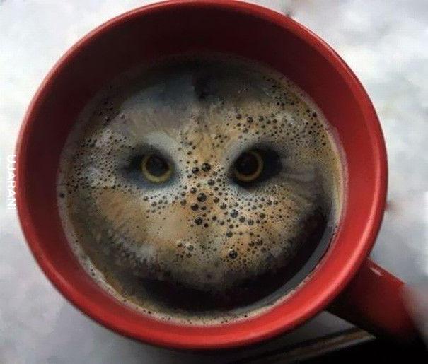 Nocna kawa