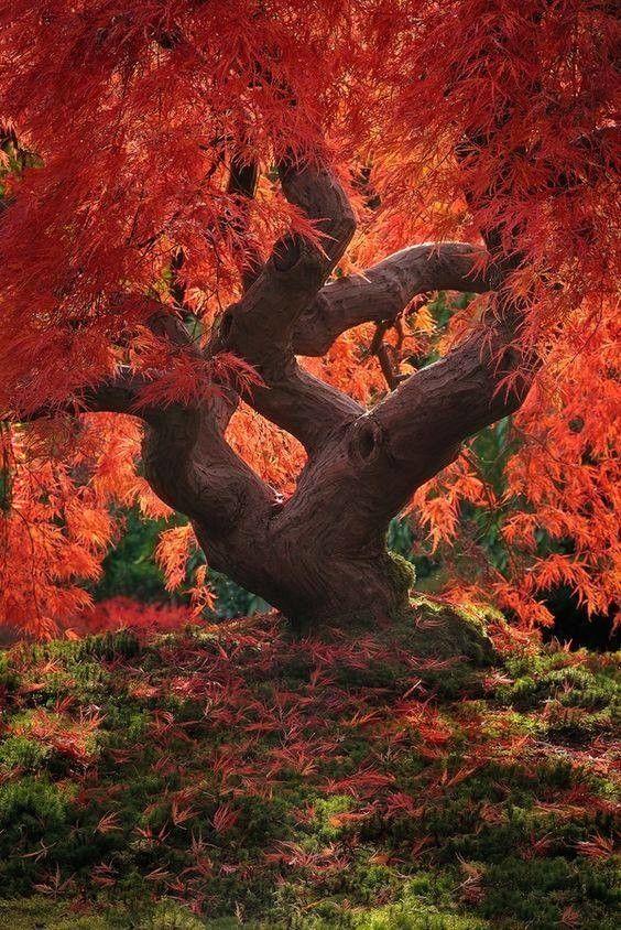 Historia drzew (37)