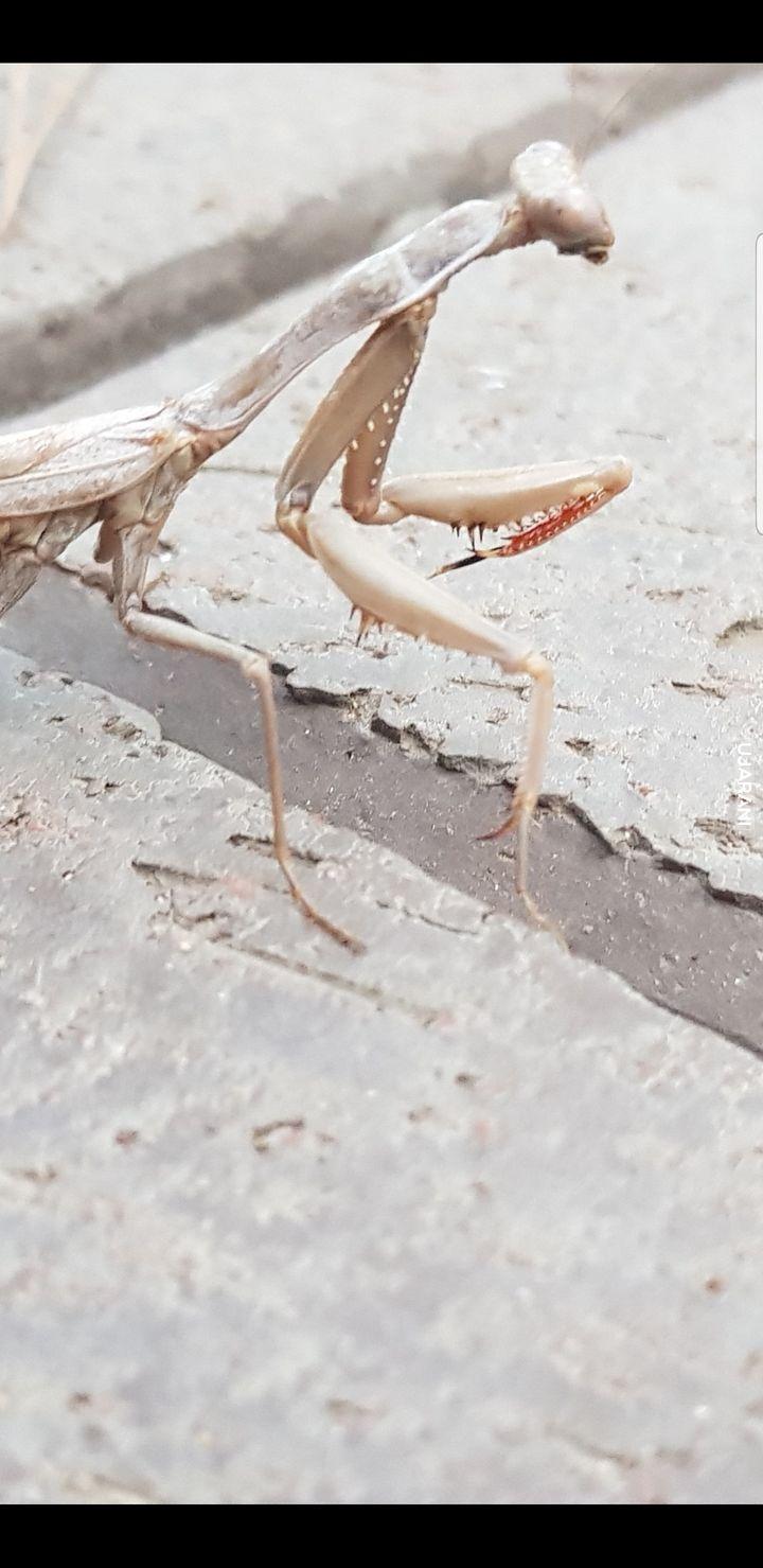 Turecki komar bojowy