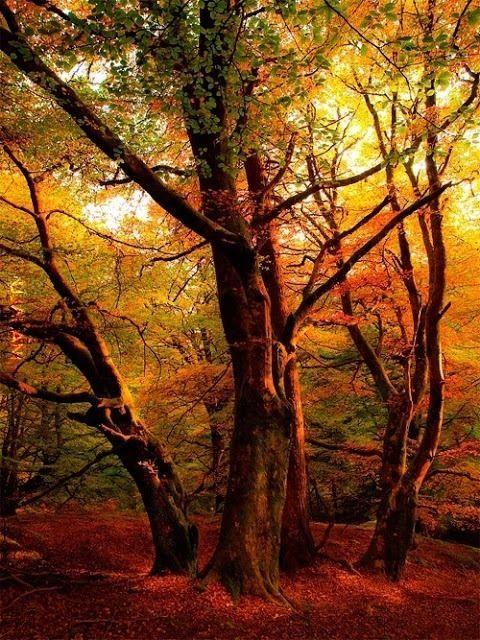Leśny klimat (54)