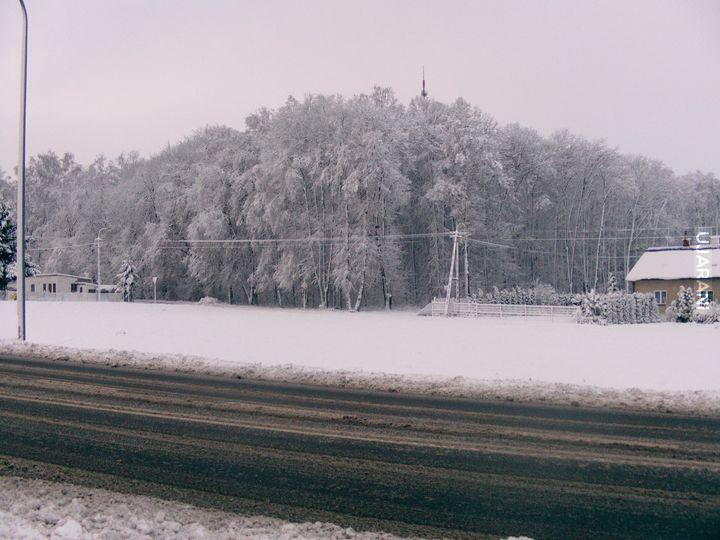 'Las w śniegu'
