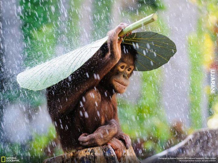 Niegłupia małpka ;)