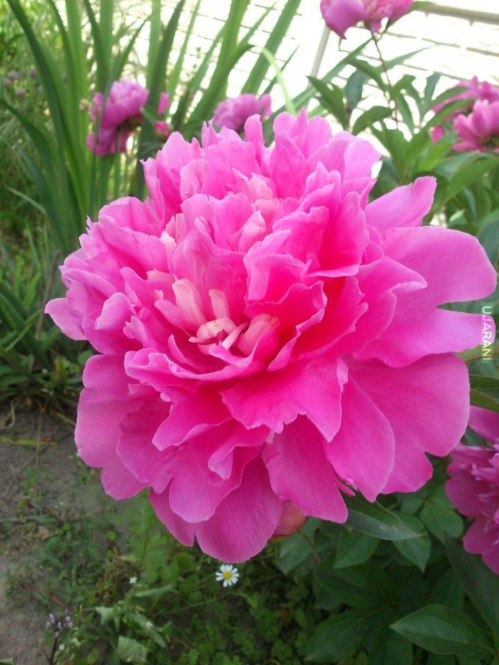 Mały kwiat