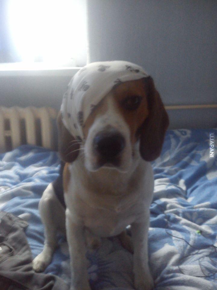 Mój pies Pirat