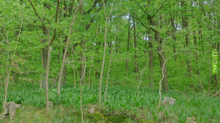 Lubię łazić po lesie...