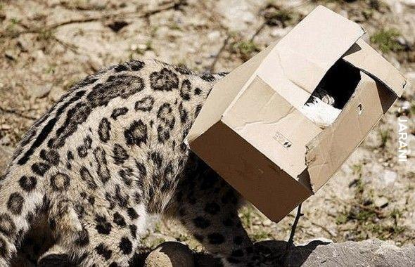 Wszystkie koty lubią pudełka