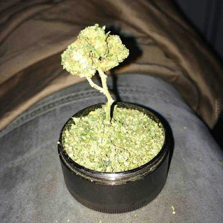 Drzewko.
