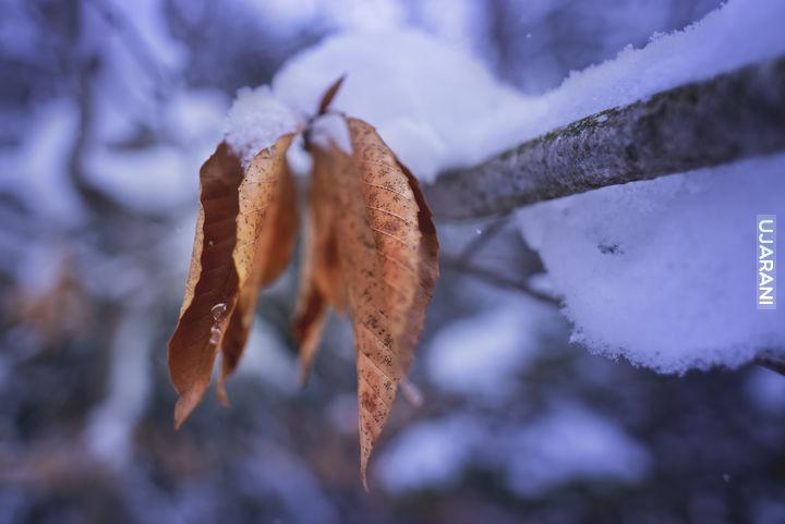 W poszukiwaniu zimy...