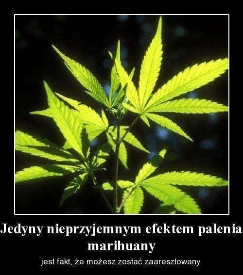 Jedyny -