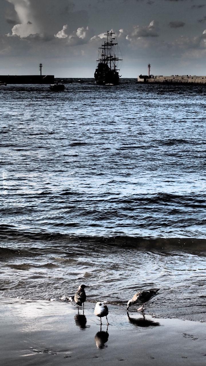 statek, morze, mewy
