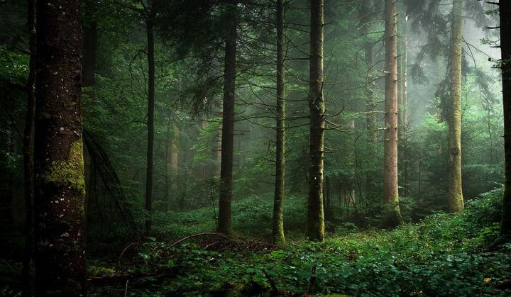 ziomki w lesie