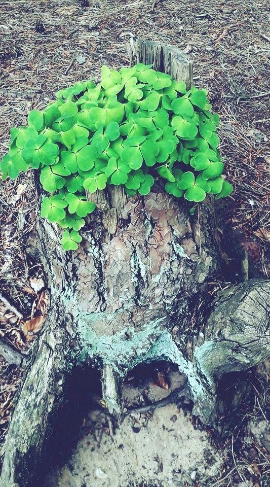 Natura też lubi roślinki doniczkowe.