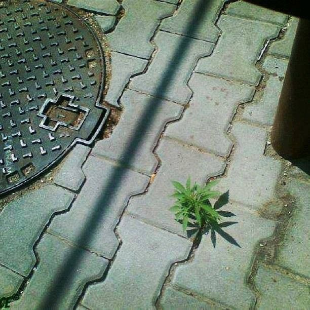 Siła natury