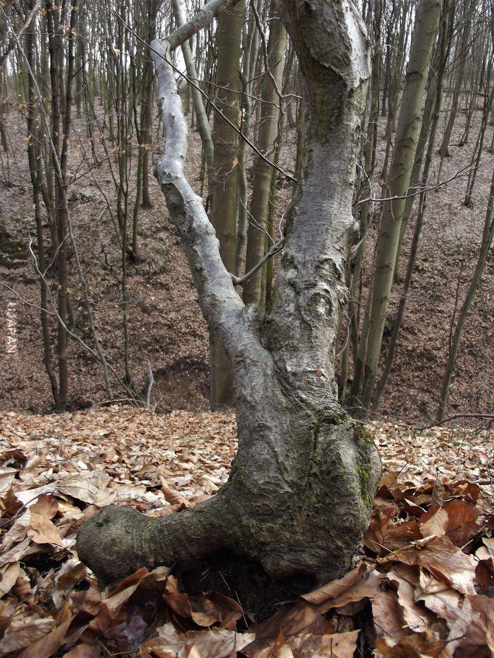 Znalazłam w lesie buta!