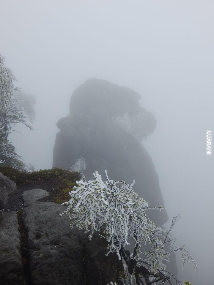 małpolud we mgle