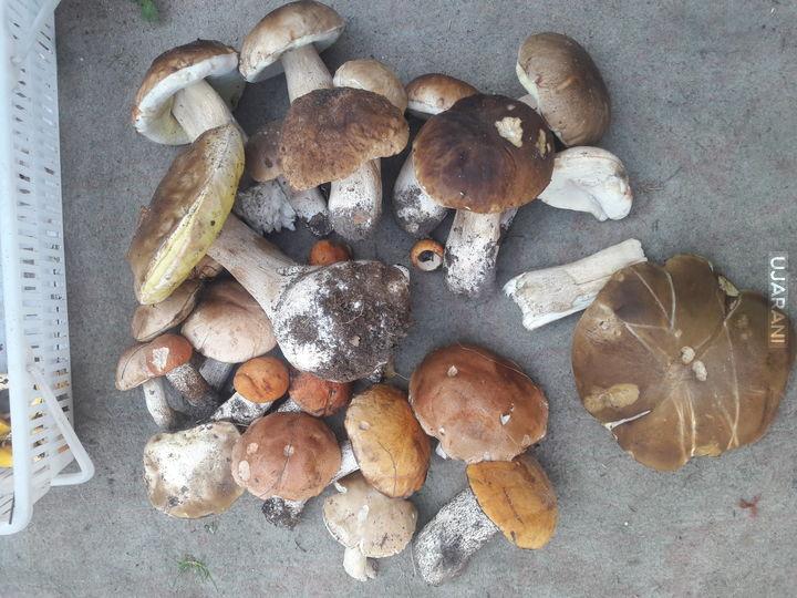 Grzyby grzybki grzyb i trawka
