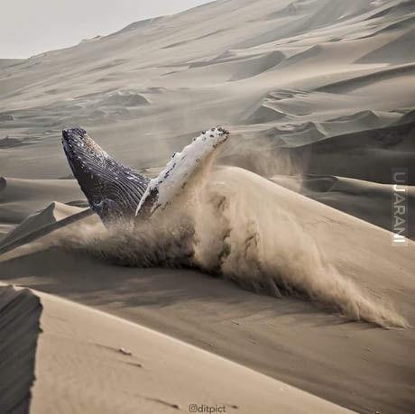 Walenie na piasku