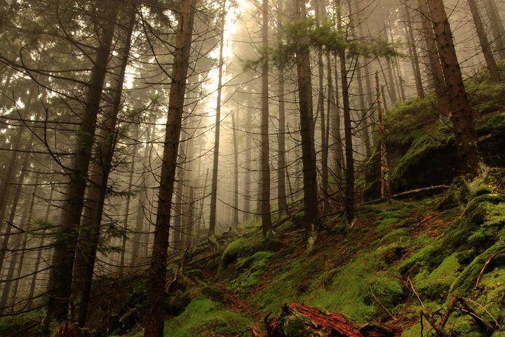 Las w Górach Stołowych