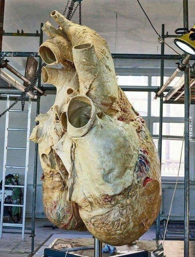 180 kg serducha