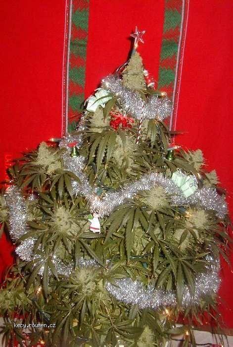 Święta idą...