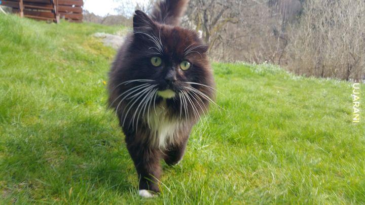 Nowy koteł się przybłąkał, dostał imię Vincent, kto wie dlaczego?